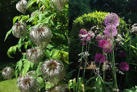 Alton Abbey blooms blog